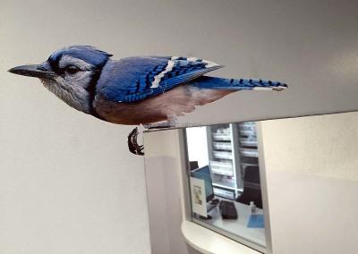 Oiseau certes...
